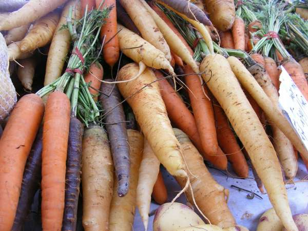A collection of carrots and root vegetables